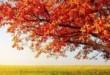 listopad_strom-150x150.jpg
