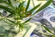 Top-2-Safest-Recreational-Marijuana-Stocks-to-Consider-in-2019-300x173.jpg