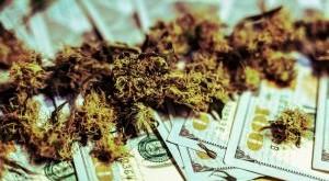medical-marijuana-buds-close-up-growing-cannabis-indoor-hareves-marijuana-buds-with-money_t20_yXPkWL-300x169.jpg