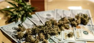 medical-marijuana-buds-close-up-grownim-cannabis-indoor-hareves-marijuana-buds-with-money_t20_kRKrxR-300x140.jpg