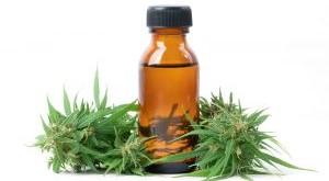 cannabis-with-cannabidiol-cbd-extract-isolated-on-RRH552V-300x236.jpg