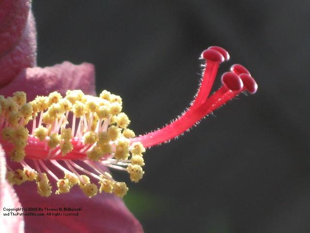 Picture of a flower from my garden.