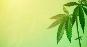 cannabis-leaf-marijuana-weed-banner-hemp-background-law-farm-green-hashish-legalize-medicinal-addict_t20_e98GmK-1-300x169.jpg
