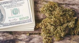 dried-cannabis-medical-marijuana-with-dollar-bill-QHTP248-300x200.jpg