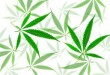 green-cannabis-leaves-with-five-fingers-marijuana-96GVNDQ-300x200.jpg