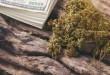 dried-cannabis-medical-marijuana-with-dollar-bill-9SFV3AR-300x201.jpg