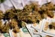 medical-marijuana-buds-close-up-growing-cannabis-i-D36RU84-300x169.jpg