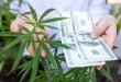 plant-money-herb-hemp-health-dollar-marijuana-ganja-legal-illegal_t20_ZJpyLg-1024x683.jpg