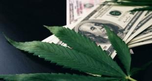 the-cannabis-plant-on-us-dollars-money-with-mari-2021-07-10-19-28-40-utc-1024x683.jpg