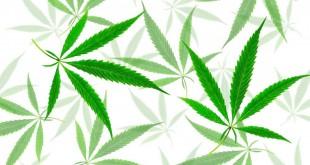 green-cannabis-leaves-with-five-fingers-marijuana-96GVNDQ-1024x683.jpg